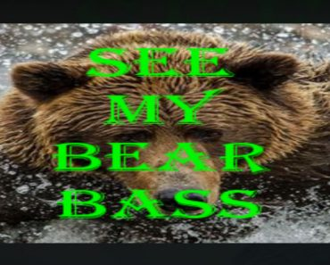 See My Bear Bass addon for kodi